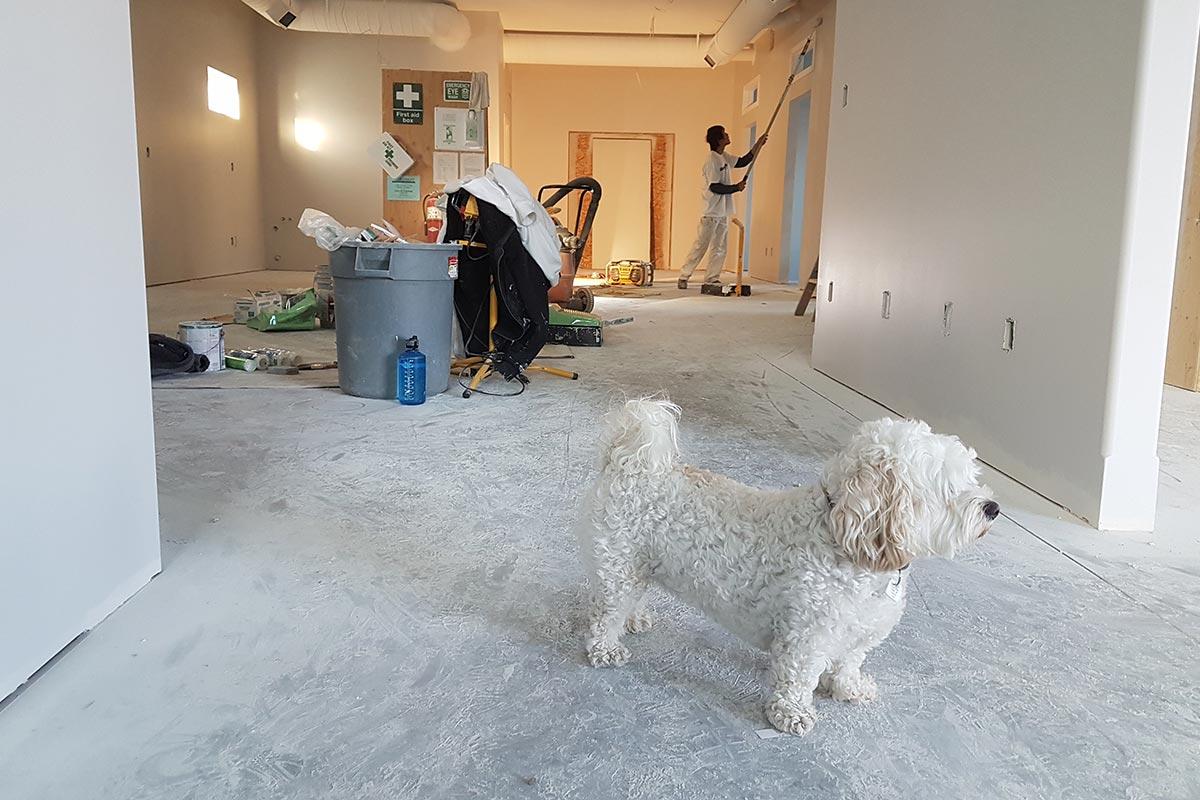Compartir piso porque su vivienda principal está en obras